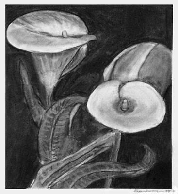 Stamen Drawing - Calla Lilies by Alexandra Herr