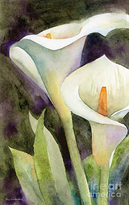 Lilies Royalty-Free and Rights-Managed Images - Calla Lilies by Amy Kirkpatrick