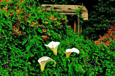 Photograph - Calla Lilies by Benjamin Yeager