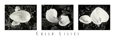 Calla Lilies Horizontal With Title Art Print