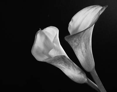 Photograph - Calla Lilies In Monochrome by David and Carol Kelly