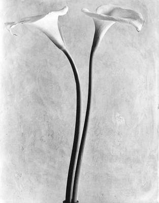 Mexico City Photograph - Calla Lilies, Mexico City, 1925 by Tina Modotti