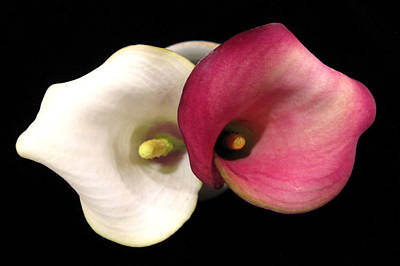 Art Print featuring the photograph Calla Lilies by Patricia Januszkiewicz