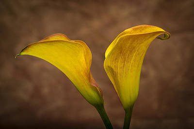 Print featuring the photograph Calla Lilies by Sebastian Musial