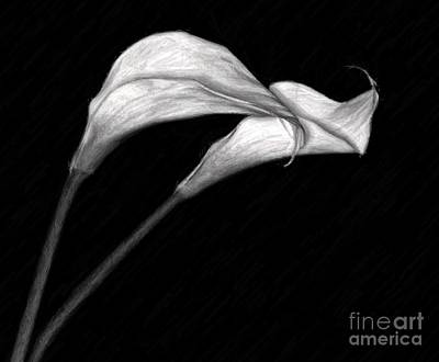 Photograph - Calla Lilies by Shirley Mangini