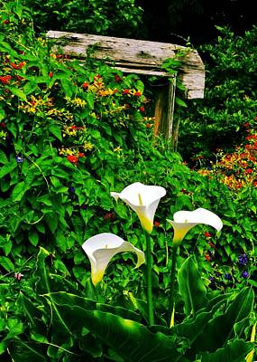 Photograph - Calla Lilies Vertical by Benjamin Yeager