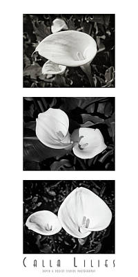 Calla Lilies Vertical With Title And Nameplate Art Print