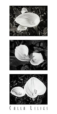 Calla Lilies Vertical With Title Art Print