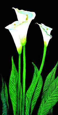 Painting - Calla Lilies by Victoria Rhodehouse