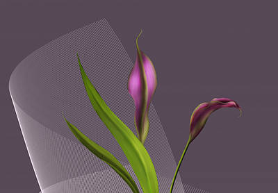 Calla Lillies Art Print