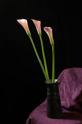 Photograph - Calla Lillies by Paul Miller