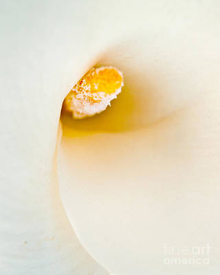 Calla Lilly Art Print by Bill Gallagher