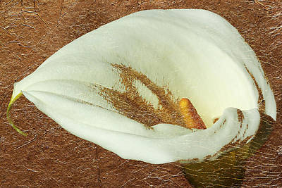 Calla Lily Gold Leaf Art Print by Phyllis Denton