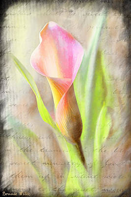 Calla Lily In Pink Art Print by Bonnie Willis