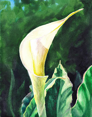 Lilies Royalty-Free and Rights-Managed Images - Calla Lily by Irina Sztukowski