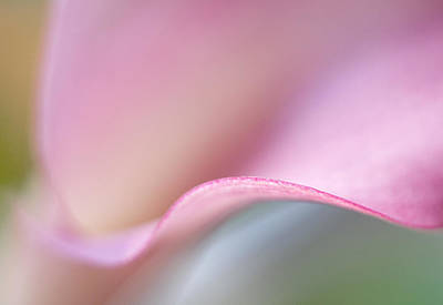 Photograph - Calla Lily Iv by David and Carol Kelly