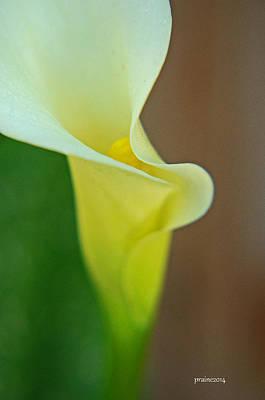 Photograph - Calla Lily by Patti Raine