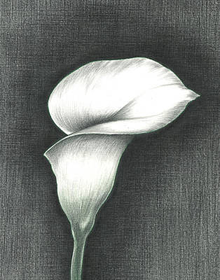Photograph - Calla Lily by Troy Levesque