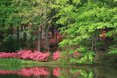Photograph - Callaway Gardens 1 by Mountains to the Sea Photo