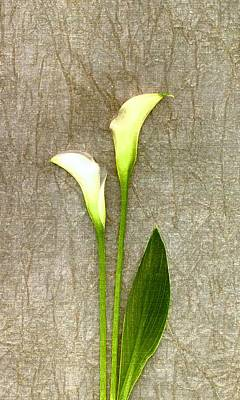 Lilies Photograph - Calli Lily Two by Linda Mears