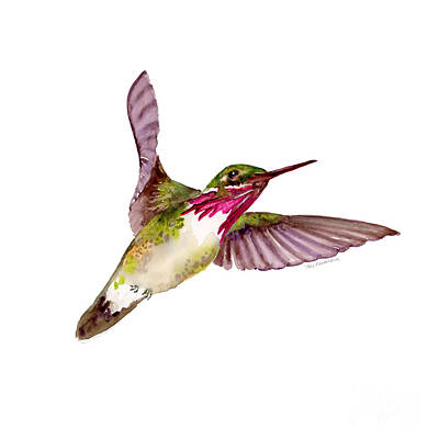 Animals Paintings - Calliope Hummingbird by Amy Kirkpatrick