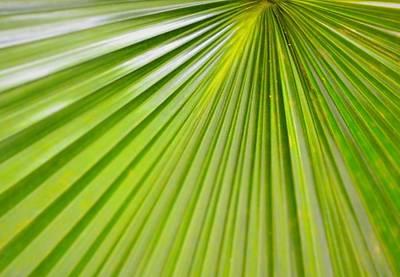 Wall Art - Photograph - Calm Palm by Serbennia Davis
