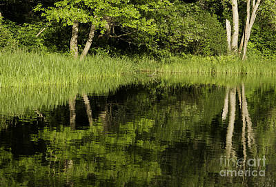 Photograph - Calm River by Les Palenik