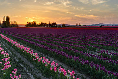 Photograph - Calm Skagit Evening by Mike Reid