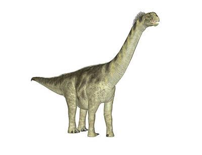 Paleozoology Photograph - Camarasaurus Dinosaur by Friedrich Saurer