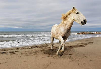 Adam Photograph - Camargue Horse Running Along Beach by Adam Jones