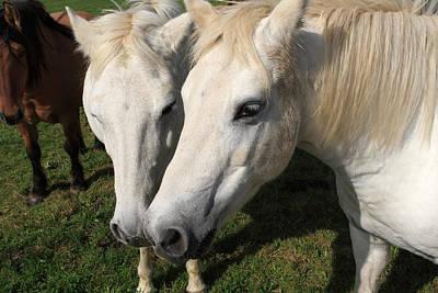 Photograph - Camargue Horses by Aidan Moran