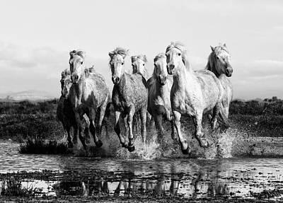 Camargue Horses At The Gallop Bw Art Print