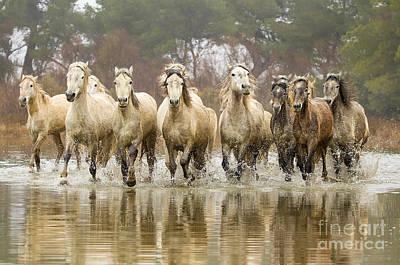Camargue Horses At The Gallop Art Print
