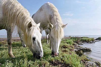 Camargue Horses Art Print by Dr P. Marazzi
