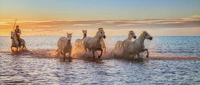 Running Horses Photograph - Camargue Horses II by Antoni Figueras