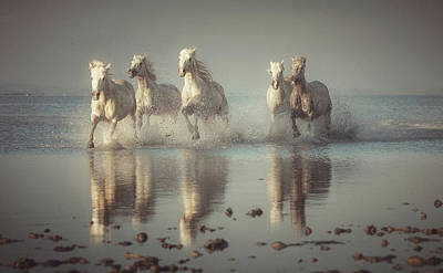 Running Horses Photograph - Camargue Horses by Rostovskiy Anton