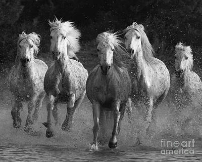 Black Horse Photograph - Camargue Horses Running by Carol Walker