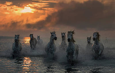 Running Horses Photograph - Camargue On Fire by Xavier Ortega
