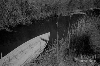 Photograph - Camarque by Hans Janssen