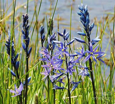 Photograph - Camas by Michele Penner