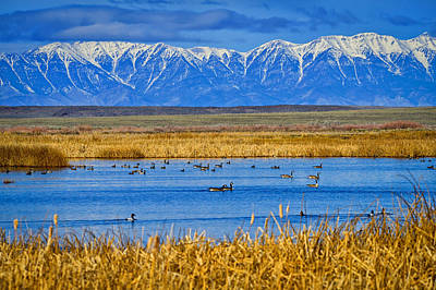 Photograph - Camas National Wildlife Refuge by Greg Norrell