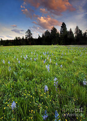 Prairie Sunset Photograph - Camas Sunset by Mike  Dawson