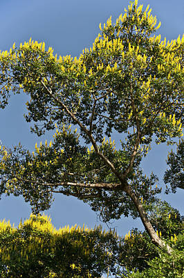 Mato Photograph - Cambara Trees Are Very Prolific by Jan and Stoney Edwards