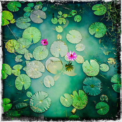 Photograph - Cambodia Lily Pond by Randy Green