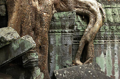 Cambodia, Siem Reap, Angkor, Ta Prohm Print by Tips Images