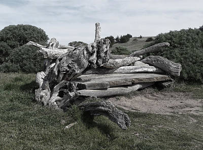 Photograph - Cambria Driftwood Bench 3 by Sandra Selle Rodriguez