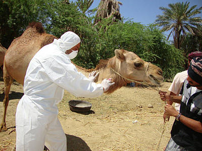 Yemen Photograph - Camel Blood Sample by Cdc