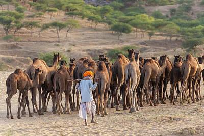 Camel Photograph - Camel Fair, Pushkar, Rajasthan State by Peter Adams