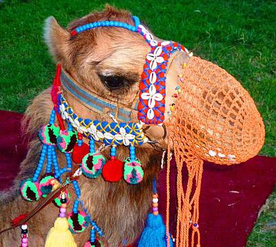 Photograph - Camel Fashion by Julia Ivanovna Willhite