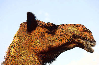 Camel Caravans Mixed Media - Camel Head Side View by Anthony Dalton